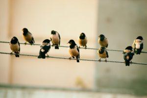pájaros o notas
